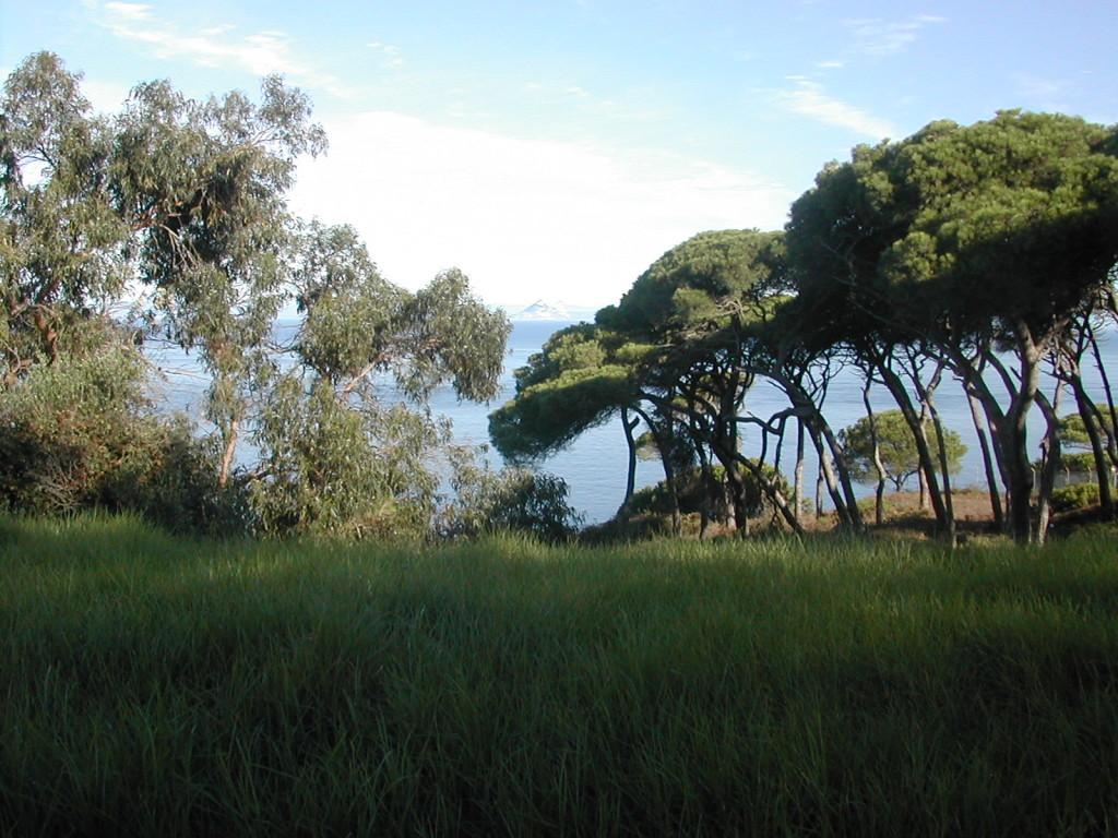 Gibraltar entre árboles