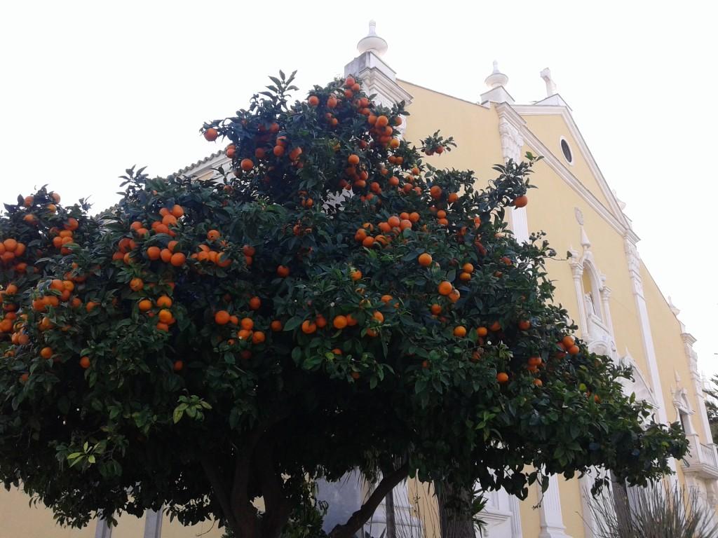 Naranjo junto al Santuario de Nuestra Señora de África