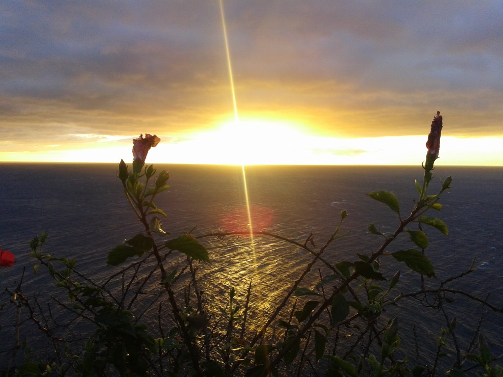 Amanecer entre flores (Ceuta, 30 de enero de 2015)