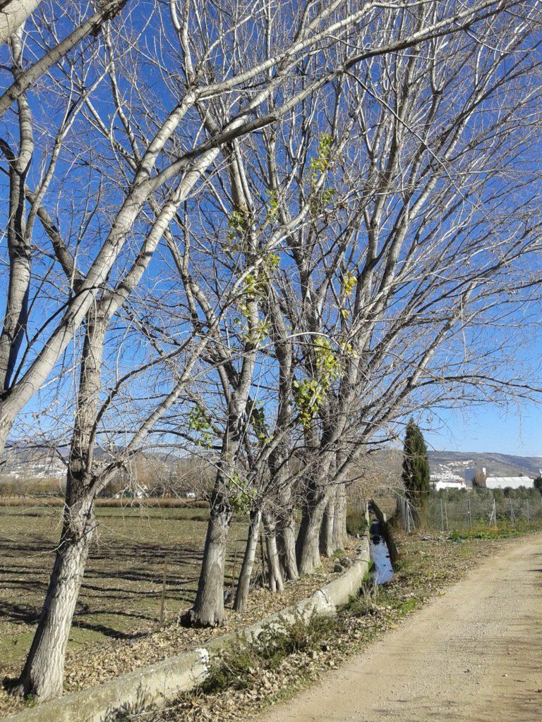 Acequia de la Tarramonta en la Vega de Granada (25 de diciembre de 2016)