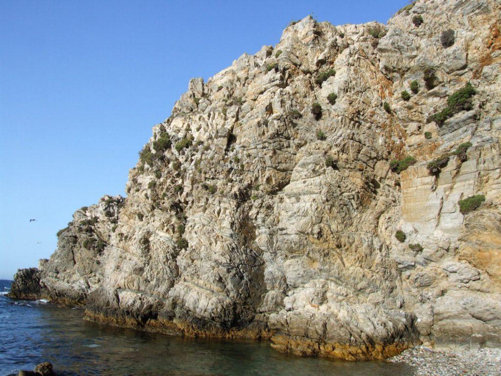 Ejemplares de limonium en las paredes verticales de la  punta de Calamocarro