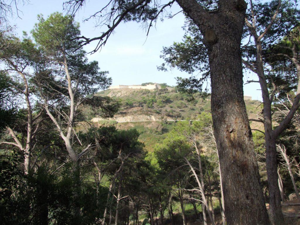 la fortaleza del Hacho vista entre pinos